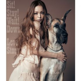 Sit! Stay! Wait! Down!/Love Story / 安室奈美恵